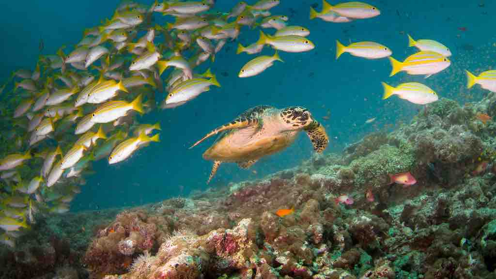 coral reef-seaturtle