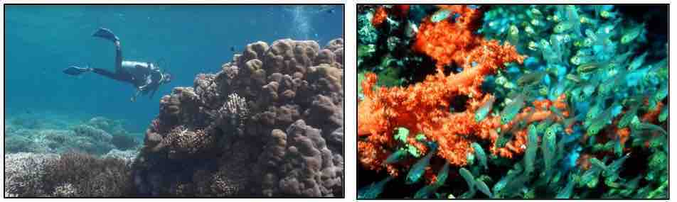 Vanishing Coral
